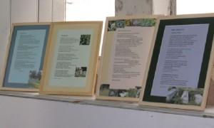 Shore Women Poems on display