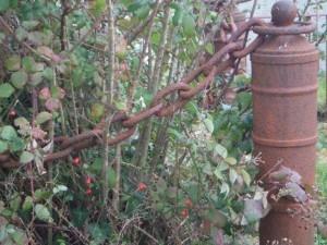 February berries
