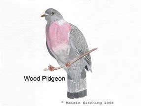 WoodPidgeonpainting