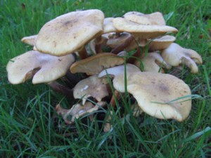 Toadstools (unidentified)