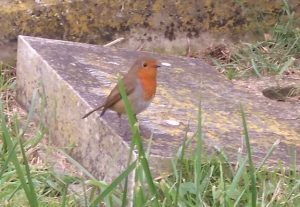 robin-4-november-2016-cropped