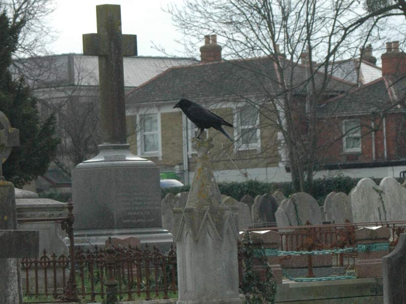 Crow in the Cemetery