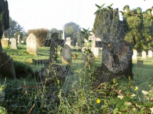 Morning dew on spiders' webs