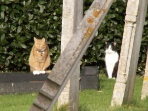 twocats